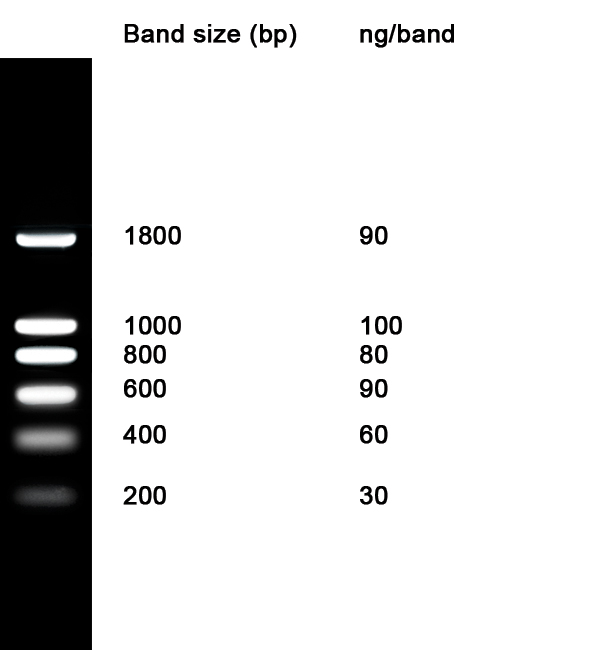 Nzydna Ladder I Nzytech Genes Amp Enzymes