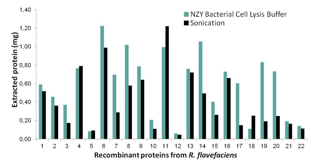 NZY Bacterial Cell Lysis Buffer