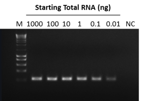 NZY First-Strand cDNA Synthesis kit- Figure1