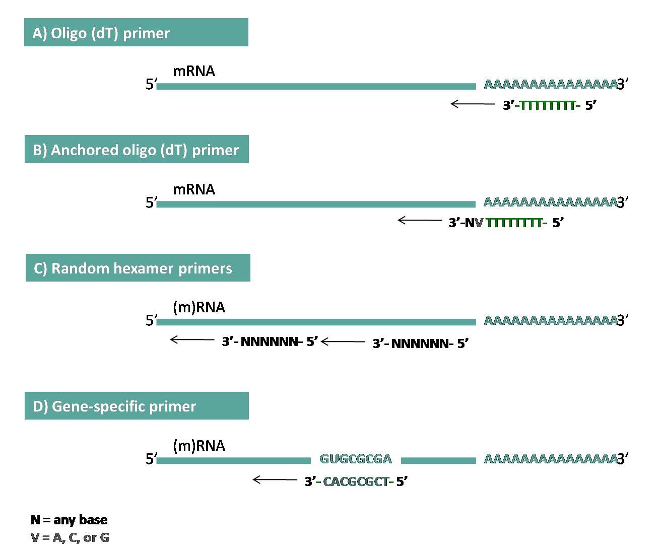 Nzy reverse transcriptase nzytech genes enzymes an overview of different priming methods for reverse transcription maxwellsz